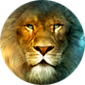 lionlove10