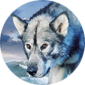 winterWolf's Avatar